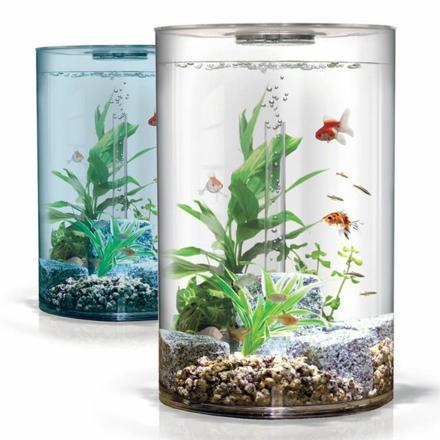 aquarium poisson rouge pas cher