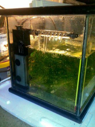 dennerle filtre pour aquariophilie angulaire nano
