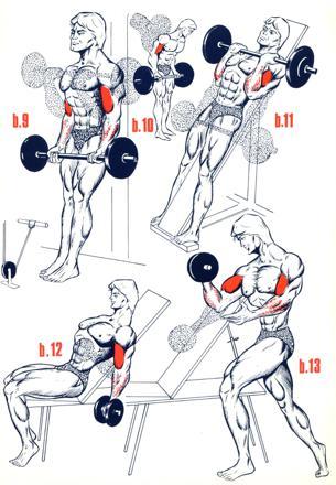 exercice de musculation biceps