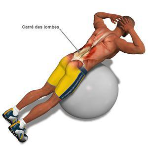 exercices pour les lombaires musculation