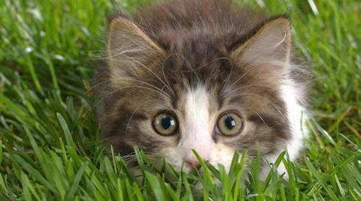 faire fuir un chat