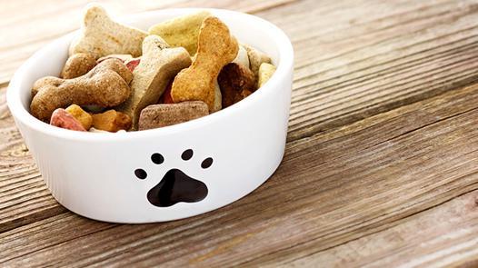 meilleure nourriture humide pour chat
