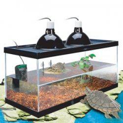 accessoire pour tortue d eau