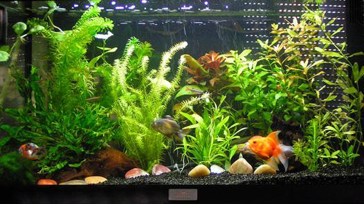 aquarium pour poisson rouge