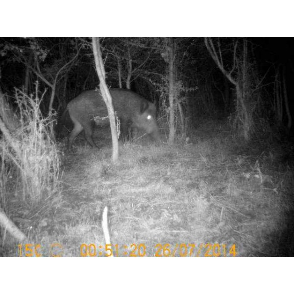 camera de chasse nocturne