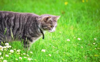 chat extérieur