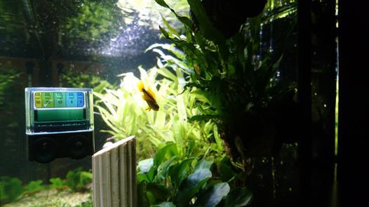 controle co2 aquarium