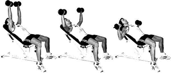 exercice musculation epaule haltere