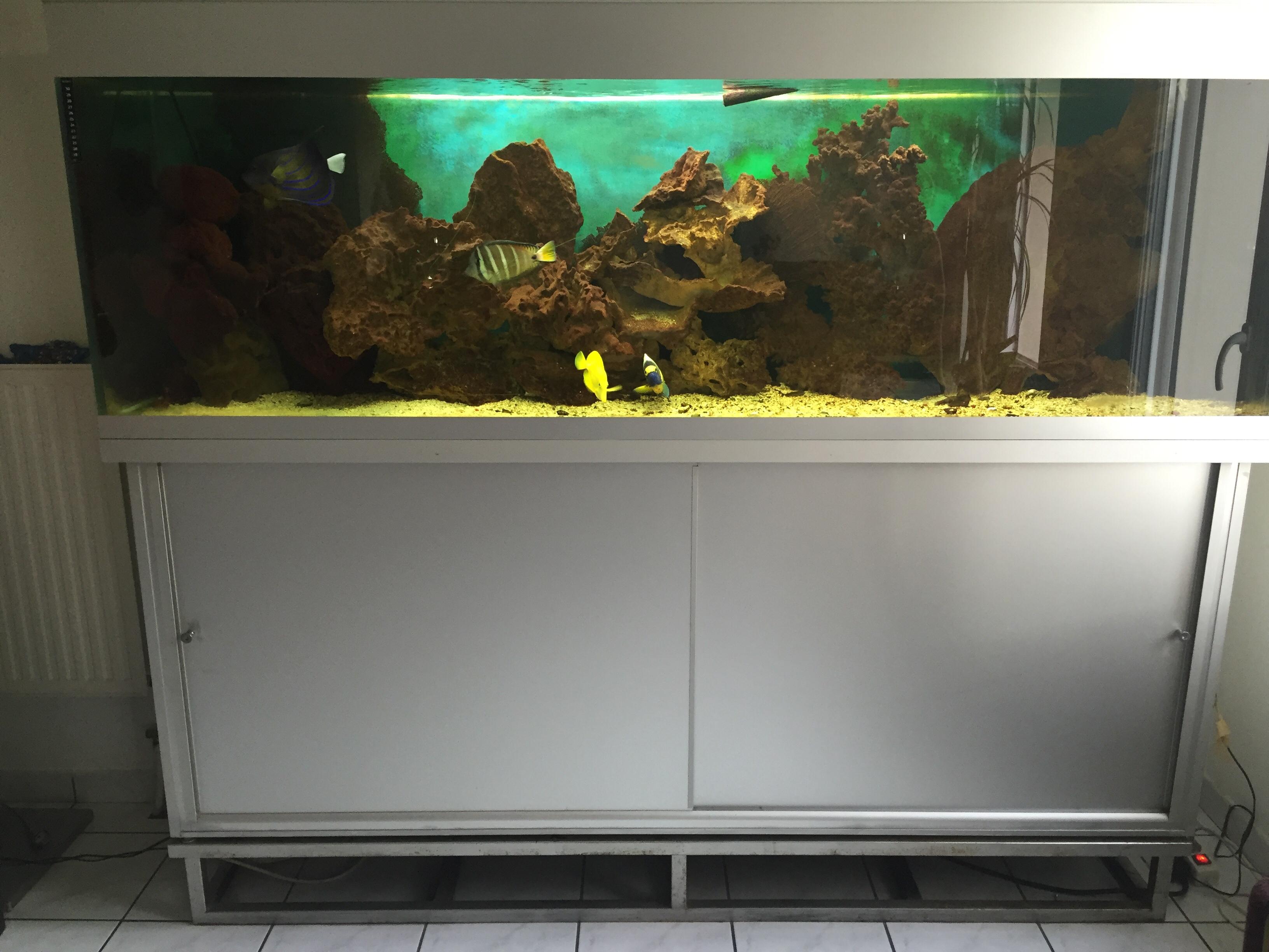 occasion aquarium
