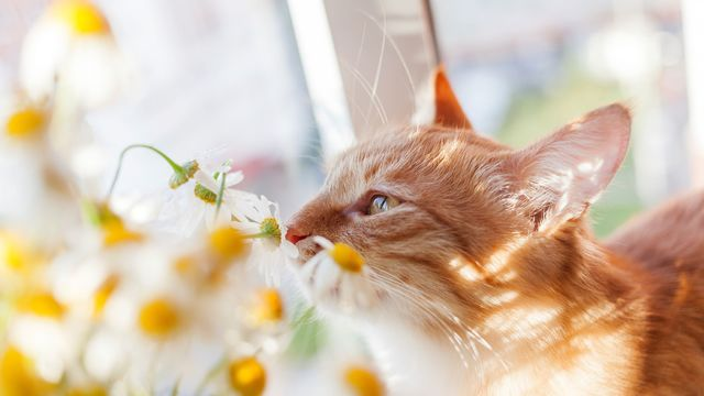odeur de chat appartement