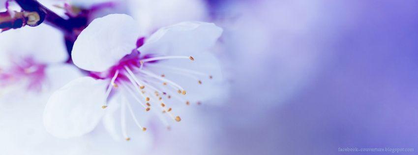 photo de couverture fleur swag