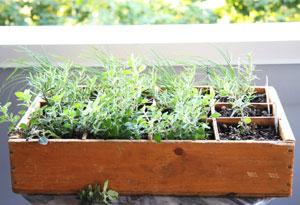 planter des herbes aromatiques en jardinière