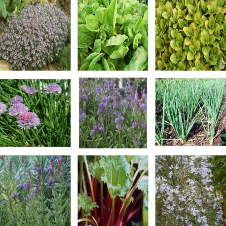 plantes aromatiques