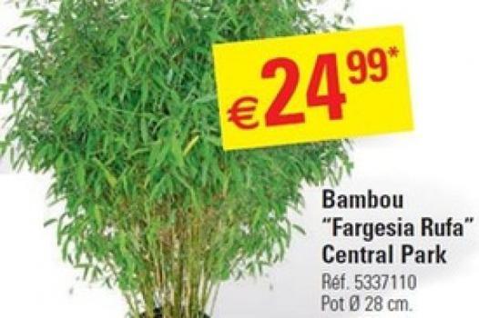 promo bambou