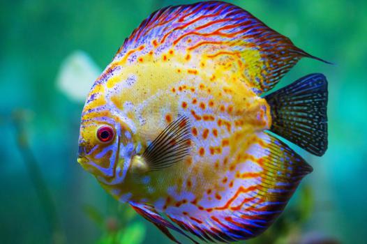 quel poisson aquarium