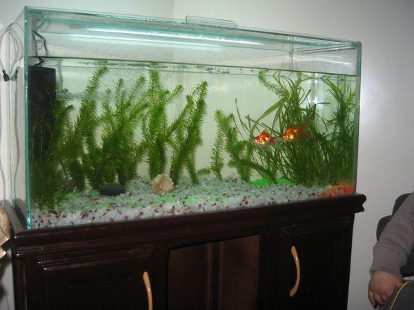 remplir aquarium